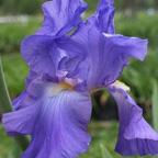 2008 Plant Sale