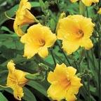 2009 Plant Sale